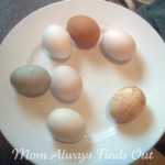 How To Make: Natural Easter Eggs Dyes and Color Eggs Naturally