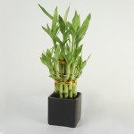 Top 10 Easy To Grow, Kid and Pet Friendly Houseplants