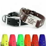Keep Your Dog Safe with a ToughHound All Sports Dog Collar