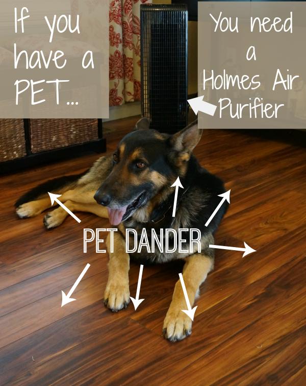 holmes air purifier pet