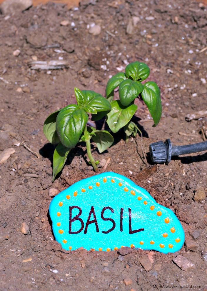 basil herb garden marker rock