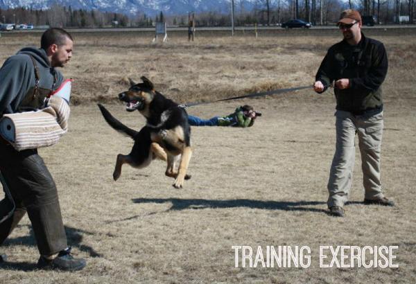 bear training exercise