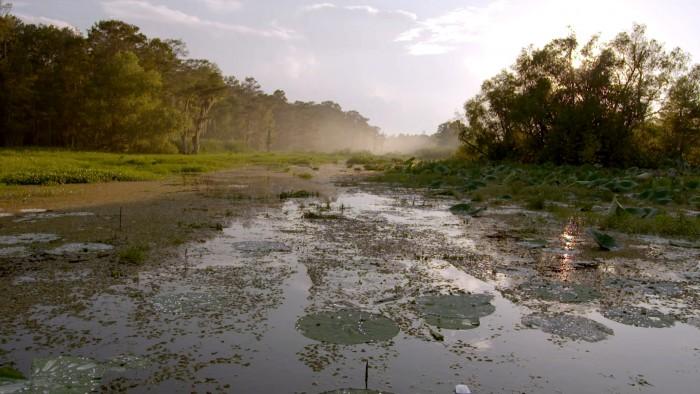Bayou Landscape, Courtesy Discovery