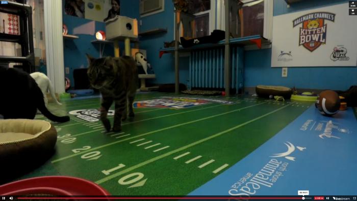 Kitten Cam Screenshot