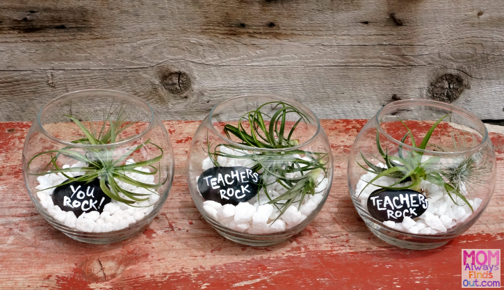 How To Make A Live Air Plant Terrarium Cutest Mini Garden Ever