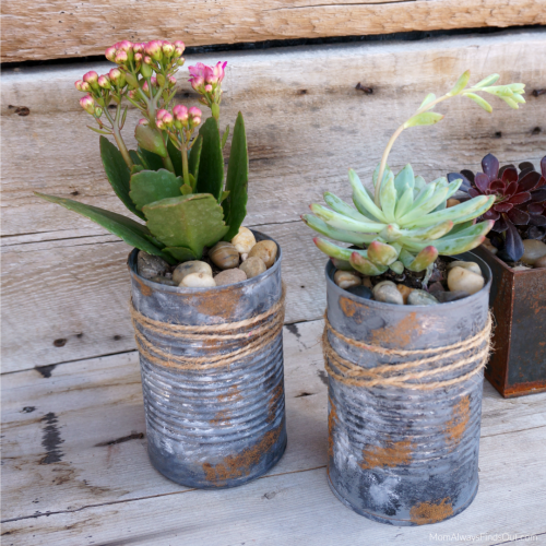 Tin Can Planters Succulents