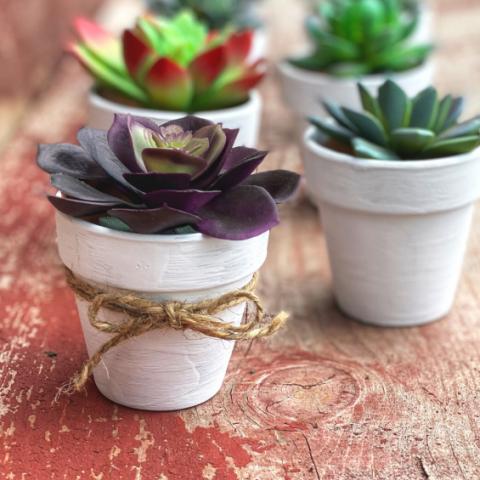 Cute Succulent Pots Craft